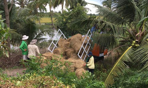 Farmers observing bales of hay in a tropical environment